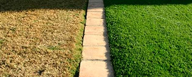 benefícios da grama artificial e natural