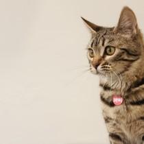 Rede de proteção de janelas para gatos